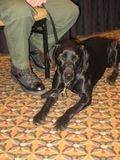 Fish and Game Dog Wrigley OWAC Santa Barbara 2008 Credit Barbara Steinberg