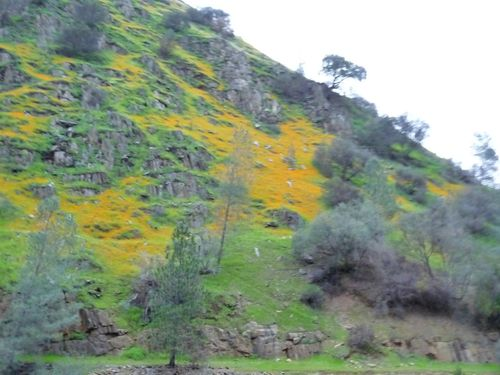 Mariposa California Hwy 140 Along Merced River Wildflowers 2009 Credit Barbara Steinberg