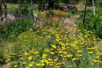 Erickson Cutting Garden Credti Barbara L Steinberg