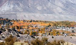 OverLook HiltonCreek Eastern Sierra Fall foliage  Hwy 395 Credit Barbara L Steinberg