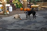 Erickson Ranch Dogs Know the Good Life Credit Barbara Steinberg 2009