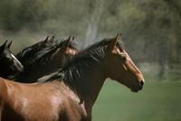 Wild Horse Sanctuary 2 Credit WHS