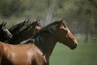 Wild Horse Sanctuary 2 Credit WHS