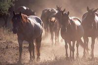 Wild Horse Sanctuary Credit WHS