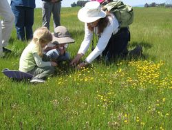 Docent Jane Hicks leading tour of Jepson Prairie_Photo by Natalie DuMont (1)