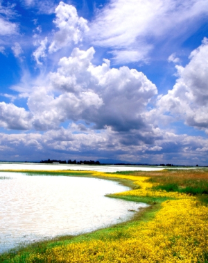 Olcott Lake at Jepson Prairie_Photo by Bud Turner, WildLight Photography