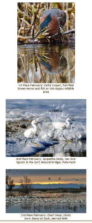 CAWW Photo Winners Feb 2012