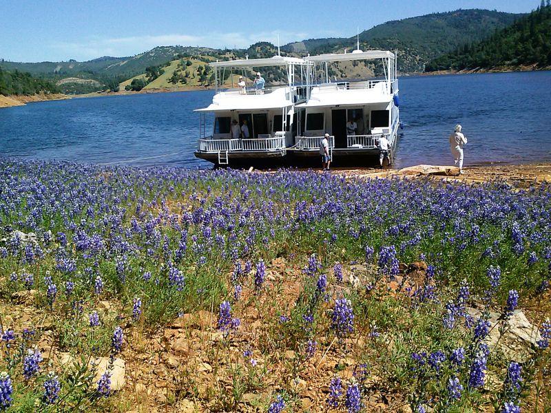 Dueling Forerver Resorts Houseboats and Lupine 2013