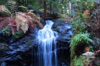 Fern Canyon waterfall Russian Gulch State Park Mendocino Credit Barbara L. Steinberg 2013