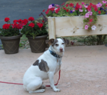 Max Official Greeter Quail Lodge Lake Almanor Credit Are You That Woman