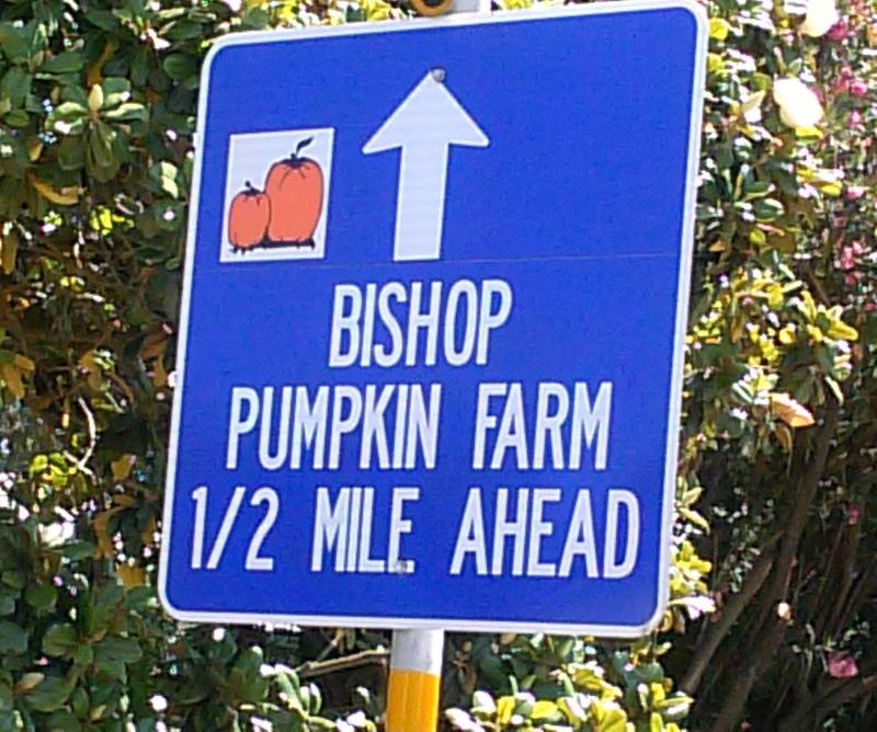 Bishop Pumpkin Farm Credit Are You That Woman