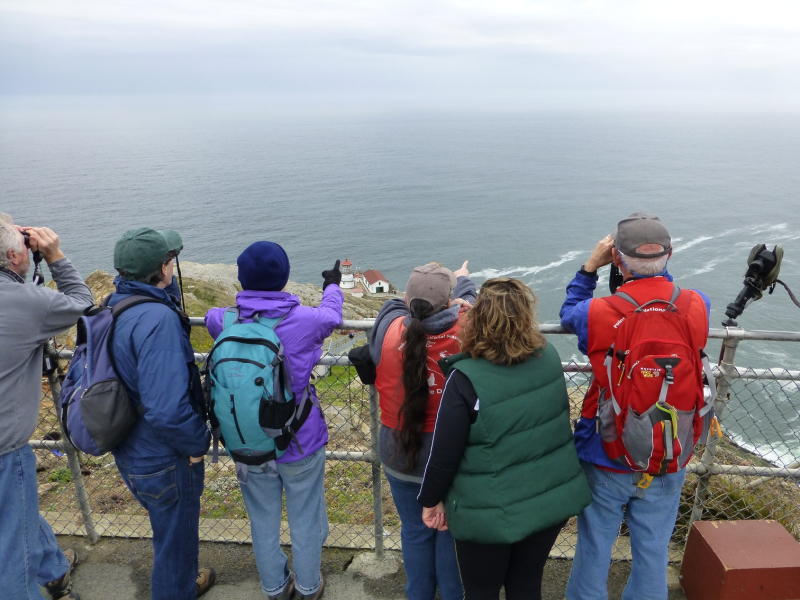The Point Reyes Lighthouse Observation Deck is a great place to watch for California gray whales as they migrate past Point Reyes Courtesy of National Park Service