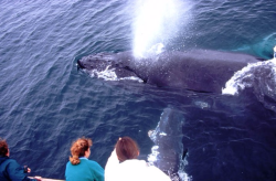 Whalewatching_on_the_Condor Courtesy of Santa Barbara Conference and Visitors Bureau