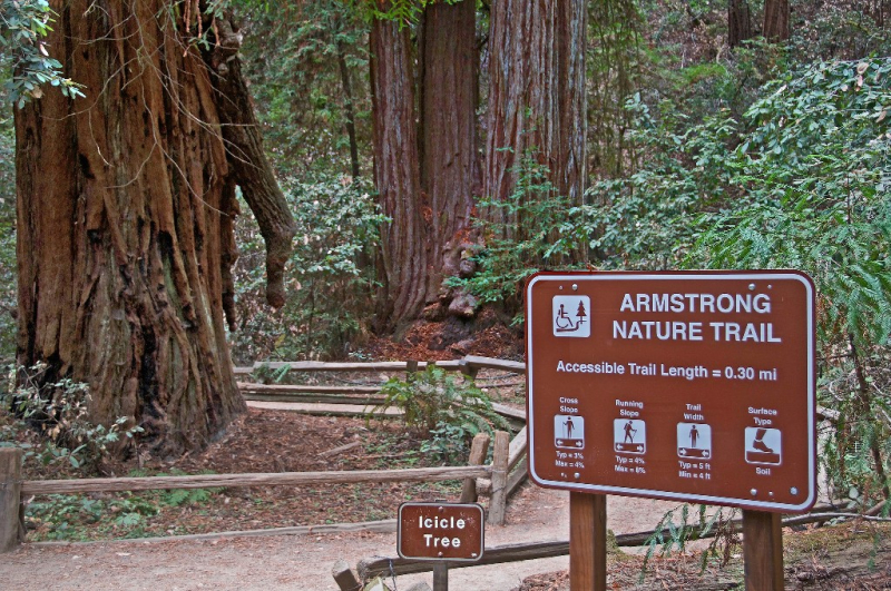 Parks_Armstrong_Redwoods_State_Natural_Reserve_Guerneville_Sonoma_County_047-X4