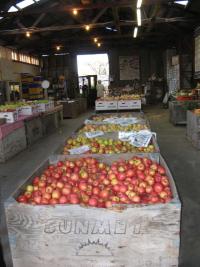 Apple Hill Rainbow Orchard 1Credit Barbara Steinberg