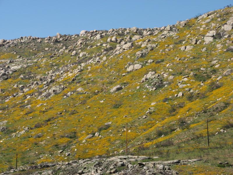 Wildflower Along Hwy 94 -3