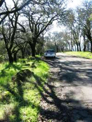 Sonoma County back road Credit Barbara L Steinberg