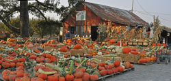 Farms_pumpkins_Hales_Apple_Farm_Sonoma_County_011-X5