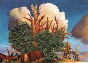 Carroll Thomas Bristlecone Pine Treet Painting Courtesy of Carroll Thomas