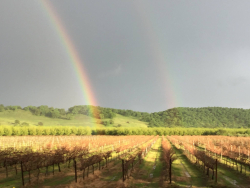 Cordi vineyards and Sutter Buttes Courtesy of Crodi Winery