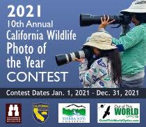 Photo Contest Badge 2021