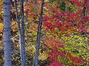 Yosemite fall autumn colors Credit Kenny Karst