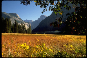 North Dome (l) Half Dome (r)  Autumn  Leidig Meadow Credit Keith Walklet
